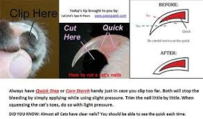 cats how to trim the nails