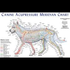 Canine Acupuncture Meridian Chart 30 You Will Love Acupressure Body Chart
