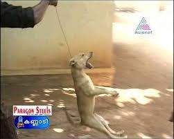 02 | September | 2008 | Serbian Animals Voice (SAV)