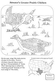 coloring pages for kids birds Attwater s Greater Prairie Chicken ...