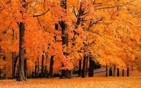 77+] Free Fall Foliage Wallpaper on ...