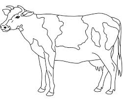 Small Picture Free Cow Coloring Pages Printable
