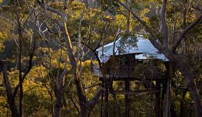 Blackheath Accommodation From Australiau0027s 1  StayzTreehouse Accommodation Nsw