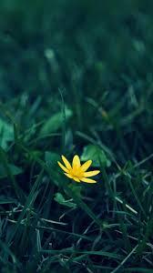 nature little yellow flower green grland blur background iphone