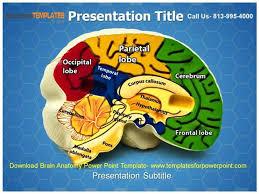 Download Brain Anatomy Powerpoint Template |Authorstream