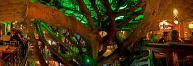 Tree House Restaurant U0026 Cafe In Monteverde  YouTubeTreehouse Monteverde Costa Rica