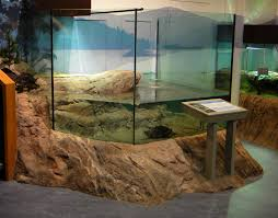 an artificial rock skirt around a custom glass aquarium built for the snapping turtle inside