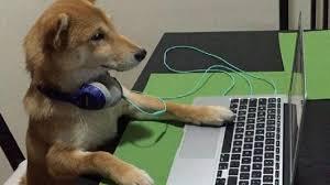 Image result for Anjing tidak bisa menonton TV
