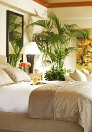 Palm Tree Bedroom Furniture Bright Tropical Bedroom With Wall Mirror And Palm Tree Houseplant