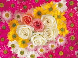 orted flowers flower colour