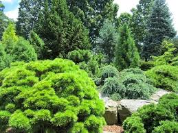 Small Picture 339 best garden conifers images on Pinterest English gardens