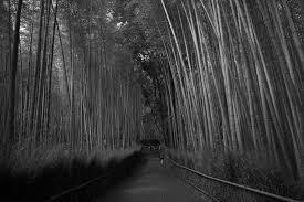 竹林の小径 写真を撮る日々