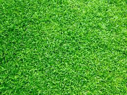 grass. Modren Grass Related Searches Nature Blur Garden Outdoors Sky To Grass
