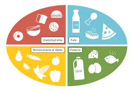 Carbohydrates Proteins And Fats Chart Clipart Images Gallery