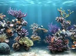 3d Aquarium Background Wallpaper Free ...