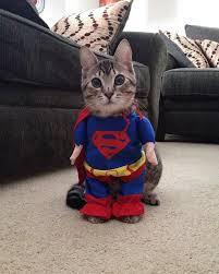 cute kittens in halloween costumes.  Halloween Halloweencostumeskittens6 To Cute Kittens In Halloween Costumes N