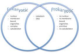 Prokaryotic And Eukaryotic Cells Chart Difference Between Prokaryotes And Eukaryotes Images Sikh