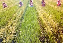 Image result for Agriculture