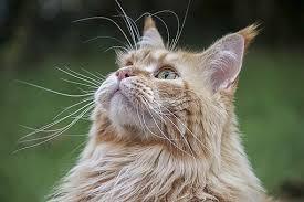nature cute cat fur mammal