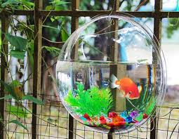 the pros and cons of using a wall fish bowl