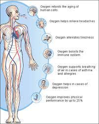 Image result for oksigen