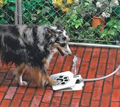 outdoor dog water fountain fresh water whenever your dog wants it