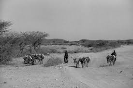 photos thousands die in parched so a un warns newshour women walk for miles in search of water in drought stricken so land in so a