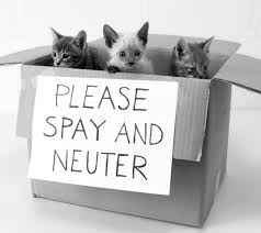 Bagheera the Diabetic Cat wants you to spay and neuter your pets!