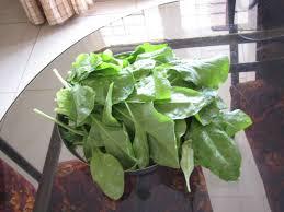 Growing Spinach In Containers Geekgardeners Weblog
