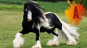 most beautiful horse breed in the world. In Most Beautiful Horse Breed The World