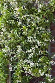 How To Grow Vines On Buildings  Old House Restoration Products Wall Climbing Plants Southern California