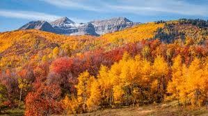 Stunning Pictures of Fall Foliage - Autumn Leaves Photos