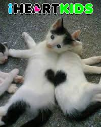 cute kittens quotes for kids. Unique Quotes Cute Kitties And Kittens Quotes For Kids C