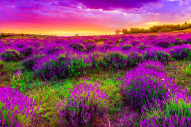 spring nature background hd. Exellent Nature Spring Dusk Desktop Background For Nature Background Hd
