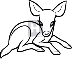 Small Picture Fawn Drawing Coloring Coloring Pages