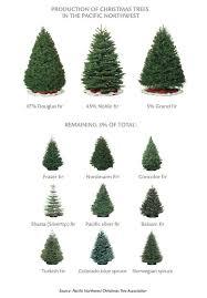 Best 25 Noble Fir Tree Ideas On Pinterest  Noble Fir Christmas Types Of Fir Christmas Trees