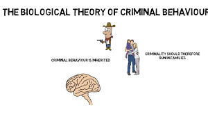 Biological Theory Gcse Psychology Criminal Behaviour Biological Theory