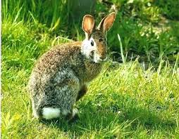 how to keep bunnies out of garden how to keep rabbits out of your garden how