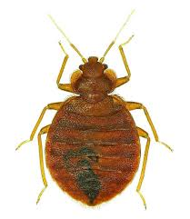 bed bug treatment options pros cons