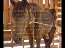 Sprüche Zum Nachdenken Pferde Zitate Sprüche