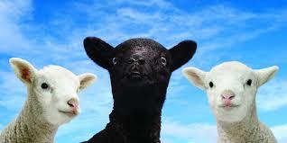 Image result for black sheep