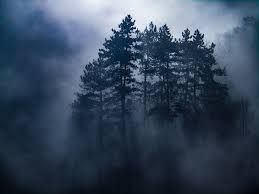 Bildergebnis für wald nebel pixabay