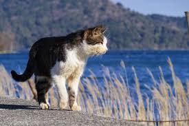 「猫のフリー素材」の画像検索結果