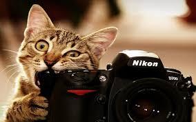 cat funny full hd wallpapers