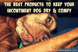 dog incontinence bed. Delighful Incontinence Throughout Dog Incontinence Bed E