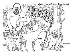 Coloring Pages Rainforest Animals The Color Panda