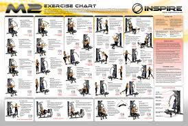 Weider Home Gym Exercise Chart Gym Workout Chart Work Out
