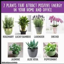 cheap office plants. home gym 7 plants that attract positive energy in your and office cheap l
