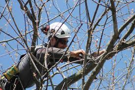 Tree Risk Assessment Baum Tree Care Baum Tree Care