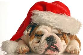 Christmas Bulldog Cliparts | Free Download Clip Art | Free Clip ...